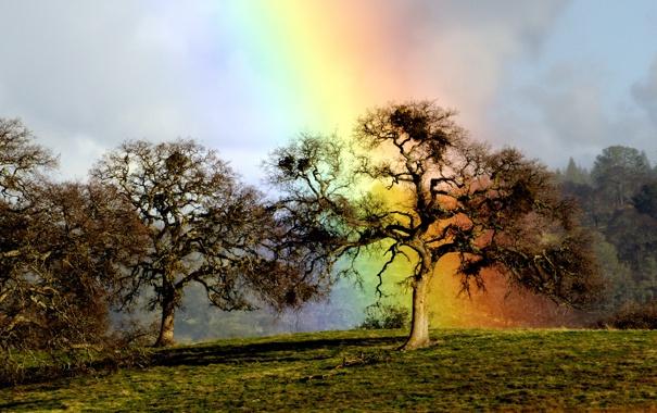 Фото обои дерево, радуга, дуб, rainbow oak
