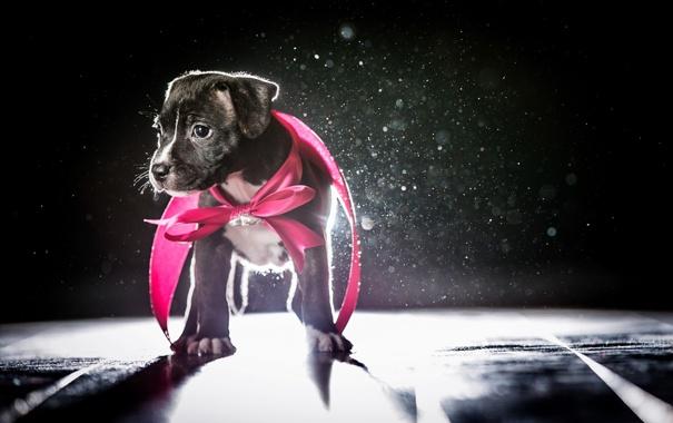Фото обои взгляд, фон, собака