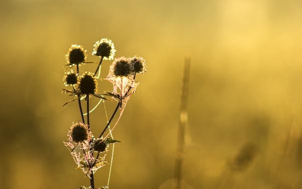 Фото обои зелень, капли, пейзаж, туман, роса, рассвет, растение