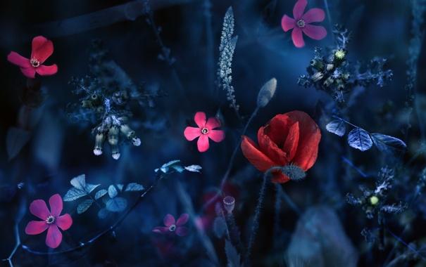 Фото обои цветы, природа, монтаж