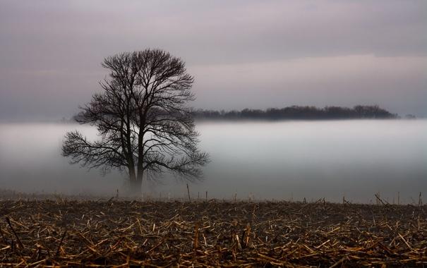 Фото обои поле, пейзаж, туман, дерево