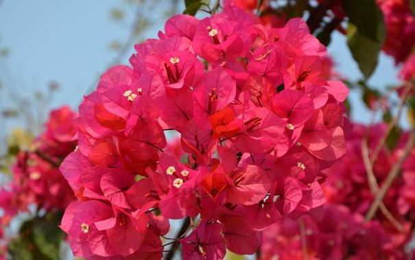 Фото обои лето, природа, цветочки, красивые, веточки