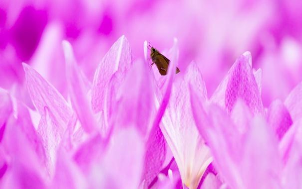 Фото обои цветы, природа, бабочка