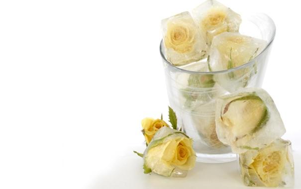 Фото обои холод, лед, стакан, кубики, розы, белые, цветки