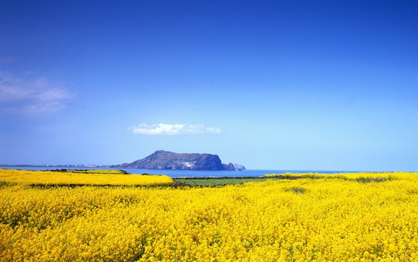 Фото обои море, поле, небо, горы, залив, рапс