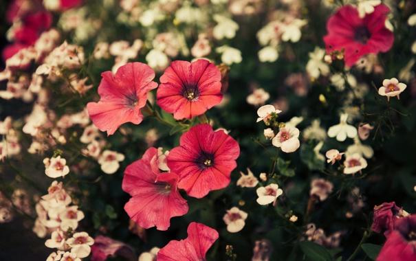 Фото обои цветы, лепестки, много