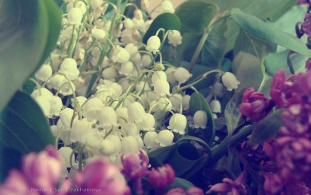 Фото обои ландыши, сирень, букет. цветы
