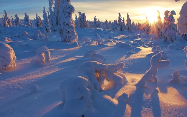Фото обои winter, tree, snow, sunset