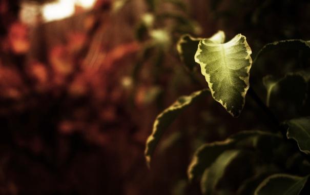 Фото обои макро, природа, фон, обои, растения, ветка, листик