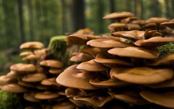 Фото обои осень, лес, дерево, грибы, мох, пень