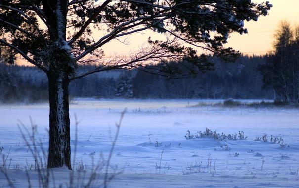 Фото обои зима, поле, дерево