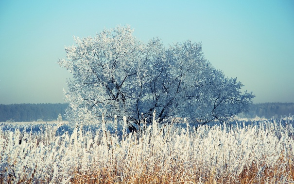 Фото обои зима, снег, дерево, камыш