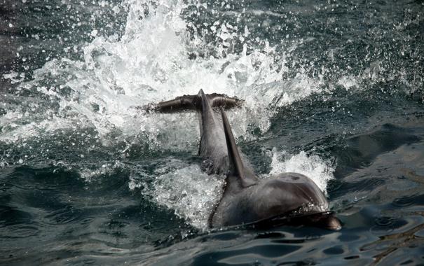 Фото обои природа, дельфин, фон