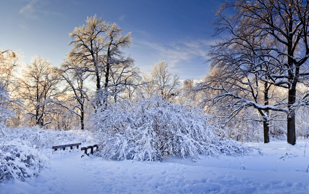 Фото обои холод, деревья, мост, Зима