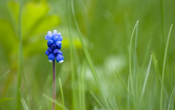 Фото обои синий, один, Mouse Flower