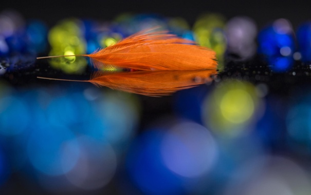 Фото обои макро, перо, оранжевое, боке