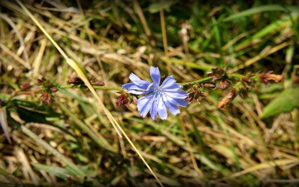 Фото обои поле, Цветок, Россия, Ока