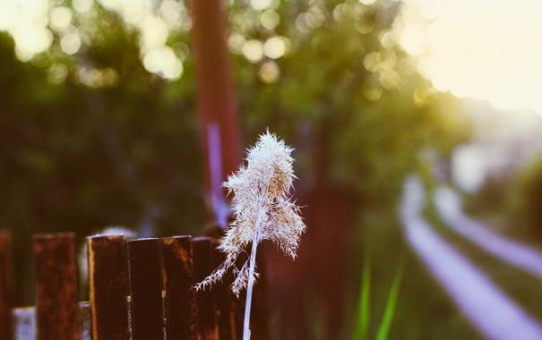 Фото обои трава, закат, природа, забор, боке