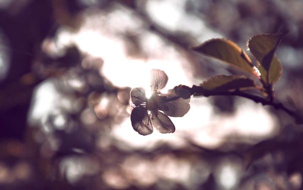 Фото обои цвета, солнце, веточка, луч, Цветок, by mike pro