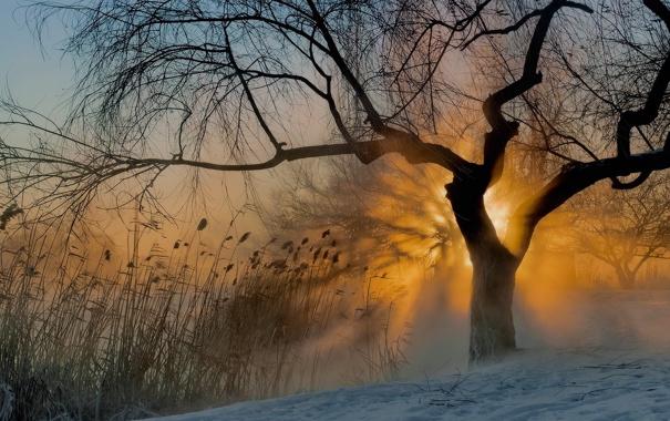 Фото обои солнце, туман, дерево, утро