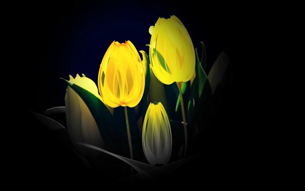 Фото обои фон, тюльпаны, цветы
