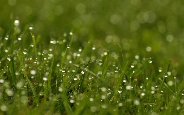 Фото обои трава, макро, роса, утро