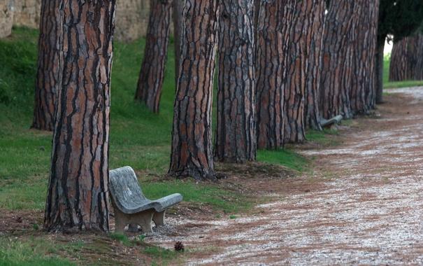 Фото обои дорога, город, парк, скамья