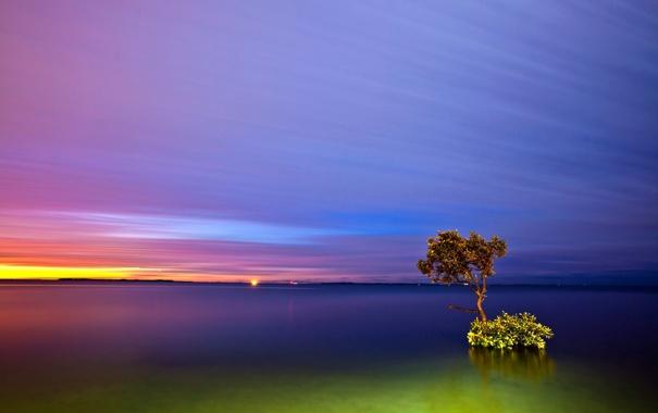 Фото обои небо, облака, озеро, дерево, обработка