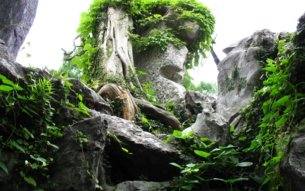 Фото обои листья, камни, дерево