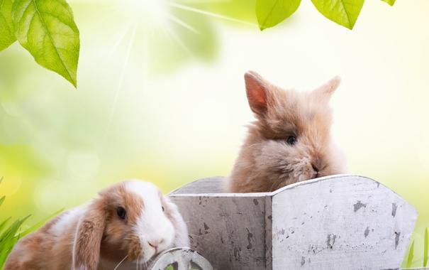 Фото обои животные, трава, листья, солнце, лучи, природа, праздник
