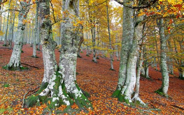 Фото обои осень, лес, деревья, склон