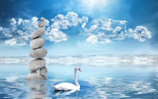 Фото обои облака, вода, небо, лебедь, камни
