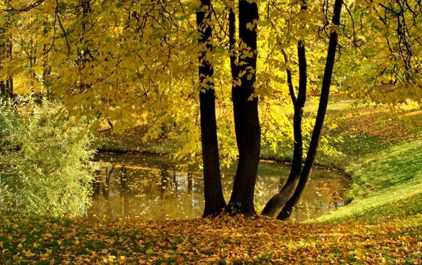 Фото обои осень, листья, деревья, пруд, парк, желтые, Воронцово