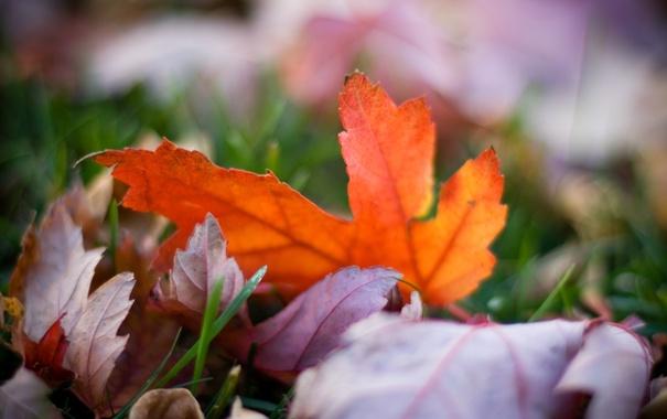 Фото обои осень, трава, цвета, макро, природа, фото, фон