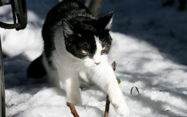 Фото обои зима, солнце, снег, ч/б кошка