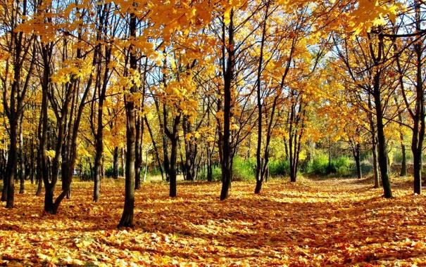 Фото обои осень, лес, листья, деревья, природа, парк, листва