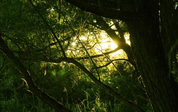 Фото обои паутинка, солнце, Лес