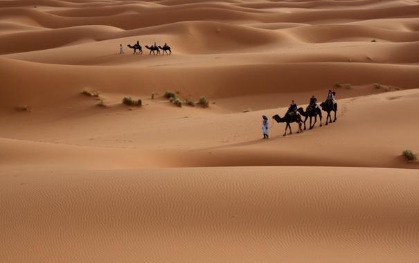 Фото обои Песок, Пустыня, Люди, Дюны, Барханы, Прогулка, Верблюды