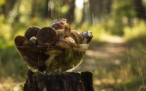Фото обои стекло, вода, капли, фон, дождь, обои, грибы