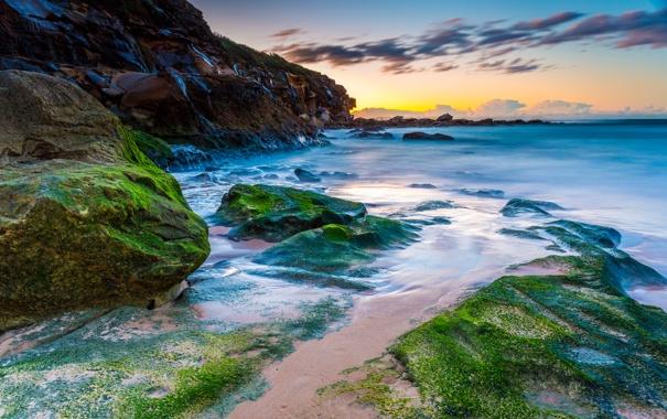 Фото обои пляж, водоросли, природа, океан, Australia, Curl Curl Beach