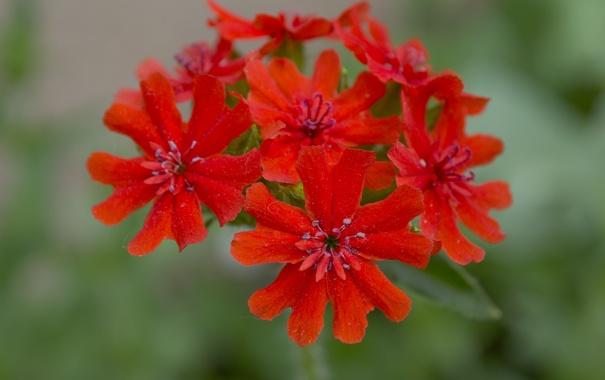 Цветы красное макро красиво что то