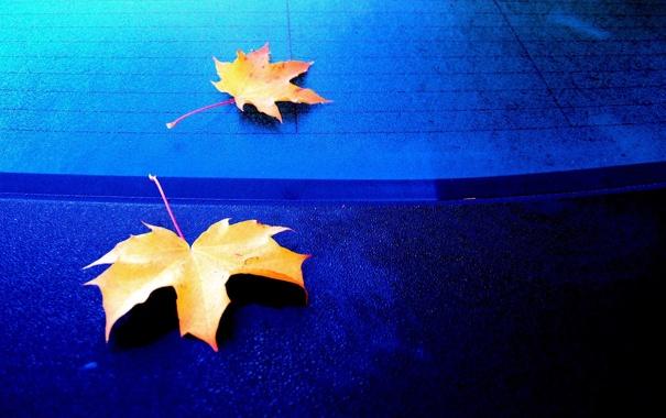 Фото обои осень, макро, листва, покрытие