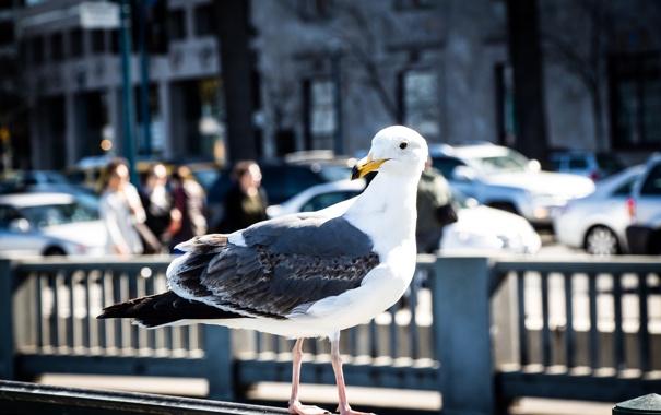 Фото обои город, птица, улица, чайка, ограда