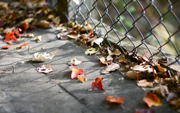 Фото обои листья, ограждение, опавшие, осенние