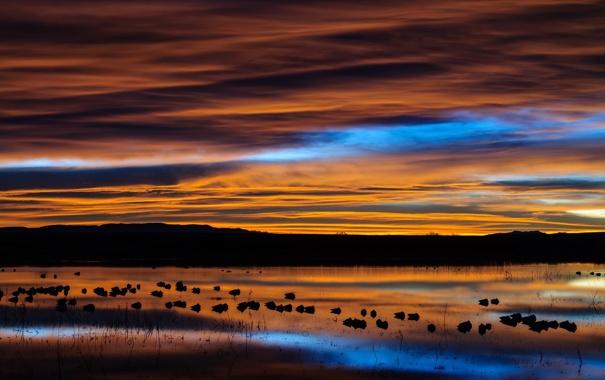Фото обои пейзаж, река, небо, природа, ночь, птицы