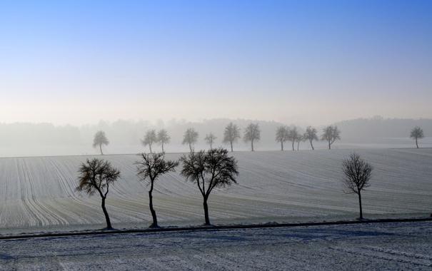 Фото обои пейзаж, поле, деревья, утро
