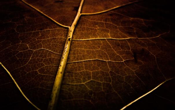 Фото обои макро, лист, фото, обои, растение, сухой, картинка