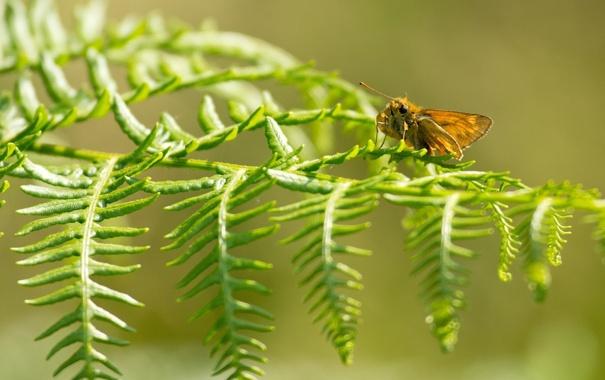 Фото обои макро, природа, лист, бабочка
