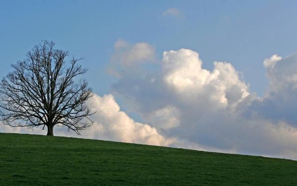 Фото обои облака, Дерево, луг