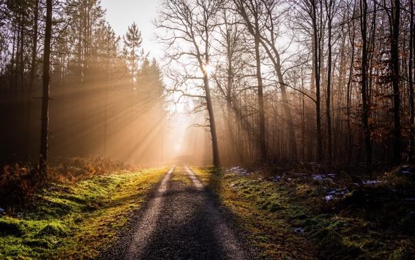 Фото обои дорога, лес, свет, пейзаж, природа, утро
